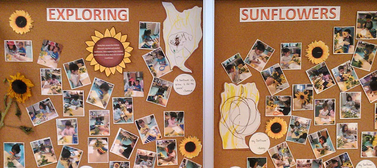 1<p>The children in the Threes Room have been exploring sunflowers through a multi-sensory lens of inquiry and exploration. The children have become scientists as they touch, examine, smell, taste and even draw the seeds, stem and flowers.</p>