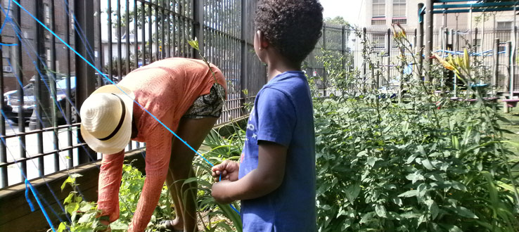 1<p>Children document their own work in the garden. We are watching to see how fast and tall the vine will grow.</p>