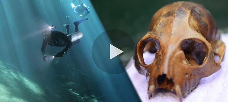1<p>Underwater Lemur Graveyard Discovered</p>