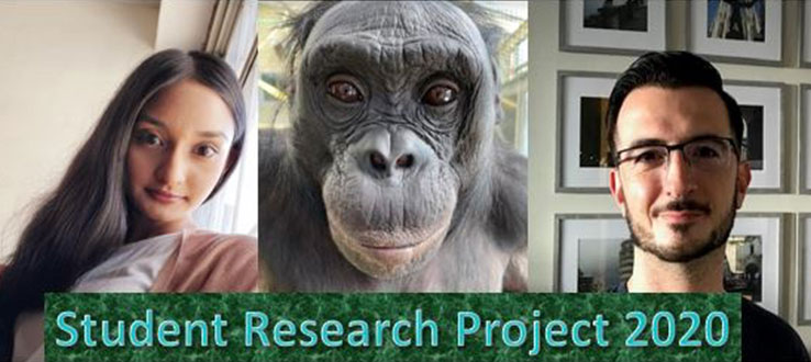 Philosophy majors, Makesha Balkaran and Vincent Andreassi, participate in research project on theory-of-mind in bonobos.