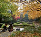 Honors Student Wins November CUNY Photo Contest