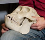 Doug Boyer Wins $50,000 Grant to Create a Database of Bones