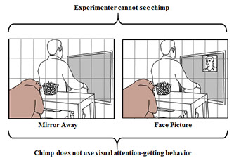 Two diagrams, Experimenter cannot see chimp. Left: mirror away; Right: face Picture. Chimp does not use visual attention-getting behavior.