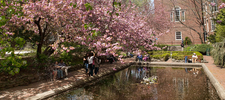Brooklyn College lily pond, may look different in Feburary